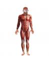 Costume homme anatomie   Déguisement